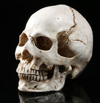 Human Skull Environmental protection resin Model Medical Realistic simulation