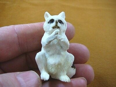(Rac-2) white Raccoon sitting of shed ANTLER figurine Bali detailed carving coon
