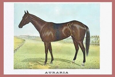 AURARIA 1895 MELBOURNE CUP Winner - painting modern Digital Art Postcard