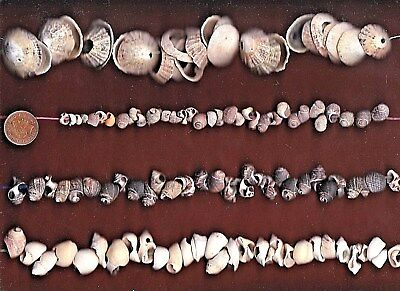 Lots of Scottish sea shells & pieces with natural HOLES 210g 4 art,threading...