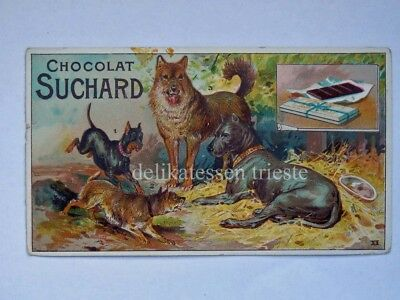 SUCHARD CACAO chocolate antica figurina lito cane dog Terrier XI