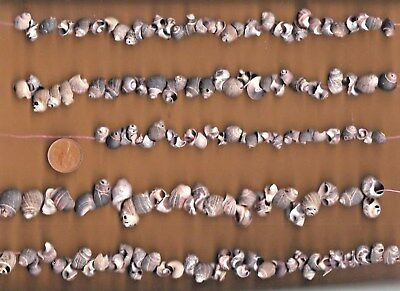 Lots of Scottish PERIWINKLE shell pieces with natural HOLES 200g 4 threading...