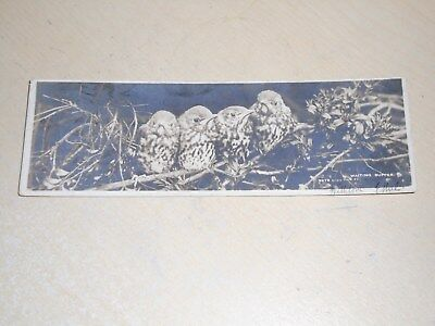 Early 1904 Bookmark Postcard - Birds - Waiting Supper - Vgc