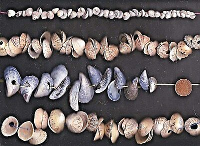 Lots of Scottish sea shells & pieces with natural HOLES 205g 4 art,threading...