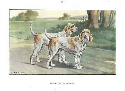 1930s Castellan France Dog Art Watercolor Print BRIQUET GRIFFON VENDEEN HOUND