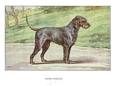 1930s Castellan France Dog Art Watercolor Print GRIFFON NIVERNAIS OTTERHOUND