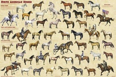 NORTH AMERICAN HORSES ~ 54 BREEDS ~ 24x36 POSTER Mustang Stallion Horse