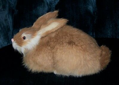 "Tan BUNNY Real RABBIT FUR Faux taxidermy REPLICA 8.5"" Collectible Prop New"