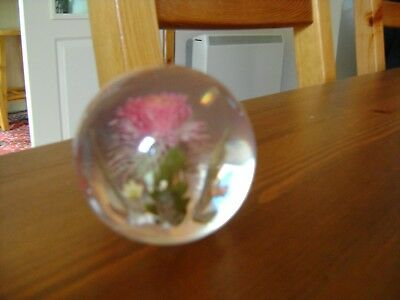 Lovely Glass Thistle Paperweight By Hippocampus
