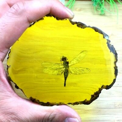 89g Beautiful amber Dragonfly fossil insects manual polishing