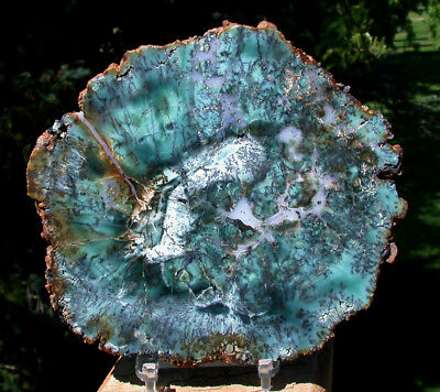 SiS: TURQUOISE GREEN & BLACK DENDRITE African Petrified Wood Round - ULTRA-RARE!