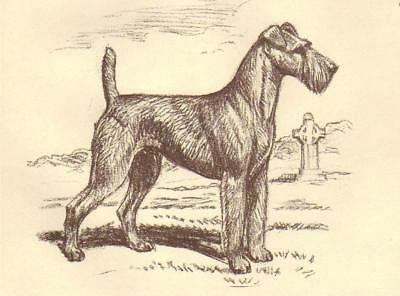 Irish Terrier - Vintage Dog Print - 1954 Megargee
