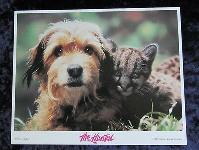 Disney's The Hunted lobby cards  - mini set of 8