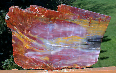 "SiS: GLORIOUS 20"" Arizona Rainbow Petrified Wood Slab - STUNNING RIP CUT PLANK!!"