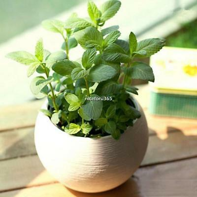 50pcs/Bag Mint Seeds Rare Herb Mentha Viridis Spearmint Catnip Seeds N4U8