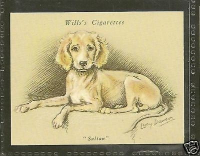 1940 Reissue LUCY DAWSON Dog Art Wills UK Cigarette Trade Card SALUKI Crm Puppy