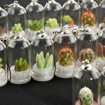 CLASSY CACTI NECKLACE Funky Plant Flower Wild Gift Novelty Sweet House Fun TFB
