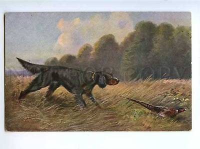 183026 Pheasant hunting with dog by MULLER Vintage postcard