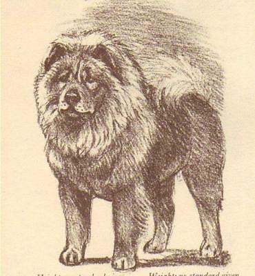 Chow Chow - Vintage Dog Print - 1954 Megargee