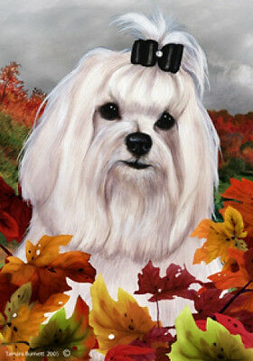 Large Indoor/Outdoor Fall Flag - Maltese Show 13221