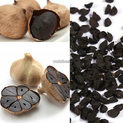 Black Garlic Seeds Pure Natural And Organic Vegetable Seeds Healthy WST