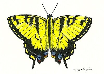 ACEO PRINT OF PAINTING TIGER SWALLOWTAIL BUTTERFLY RYTA Interior Design Modern