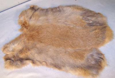 auction NATURAL BROWN GENUINE RABBIT SKIN  hides furs pelt crafts skins rabbits