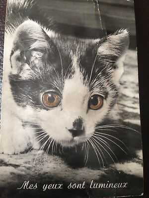 Vintage French American Novelty Black & White Cat Sounding Postcard