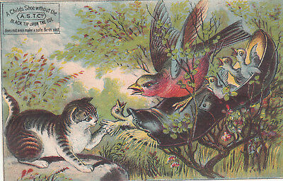 AST Co Black Tip Toe Shoes Kitten Birds Nest W P Goss Middle St Vict Card c1880s