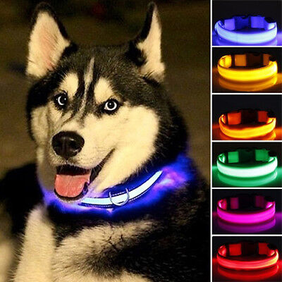 Nylon LED Pet Dog Cat Collar,Night Safety Flashing Glow In The Dark Dogs Leash L