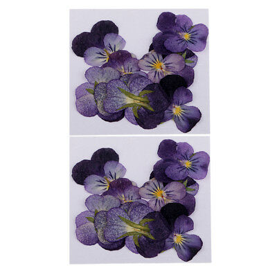 24pcs Natural Violet Real Dried Flowers Embellishments Nail Art Accessories