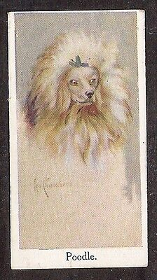 1924 UK Leo Chambers Dog Art Head Study Moustafa Cigarette Card TOY MINI POODLE