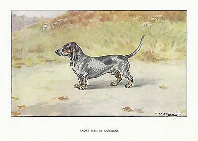 1930s Castellan France Dog Art Watercolor Print BASSET BLEU DE GASCOGNE HOUND