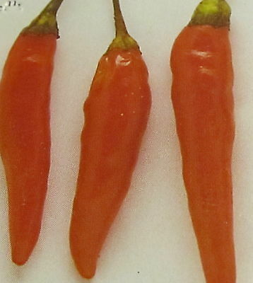 Vegetable  Hot Chilli Pepper Orange Cayenne  1000 Seeds  Bulk