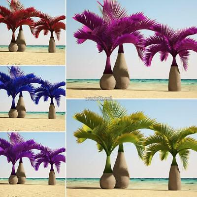 10x Colorful Palm Bottle Tree 10 Seeds Ready Plant Easy Grow Beauty Garden WST