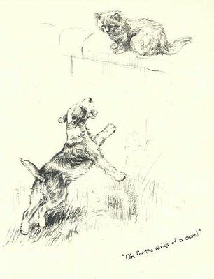 Wire Fox Terrier C - Vintage Dog Print - 1948 KF Barker