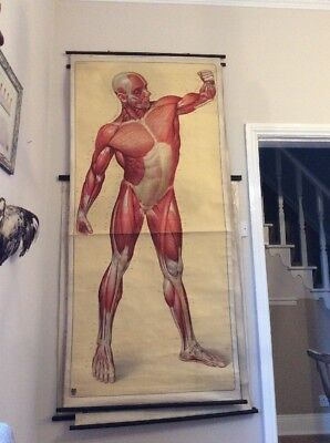 Vintage German Linen Backed Anatomical Medical Poster Adam Rouilly Life Size