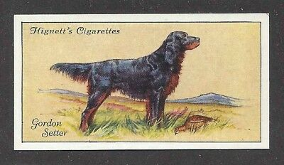 Rare 1936 UK Dog Art Full Body Portrait Hignett Cigarette Card GORDON SETTER