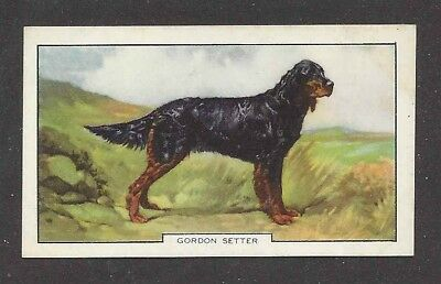 1938 UK Dog Art Full Body Portrait Study Gallaher Cigarette Card GORDON SETTER