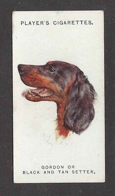 1929 UK Arthur Wardle Art Dog Portrait Player Cigarette Card GORDON SETTER
