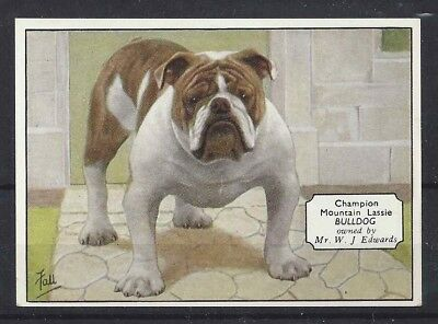 1938 UK Dog Art Photo Hand Colored Ardath Cigarette Card Named ENGLISH BULLDOG