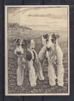 1938 UK Dog Art Etching Ardath Large Cigarette Trade Card WIRE FOX TERRIER VG+