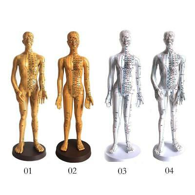 Chinese Medicine Teaching Human Body Model Acupuncture and Moxibustion Meridian