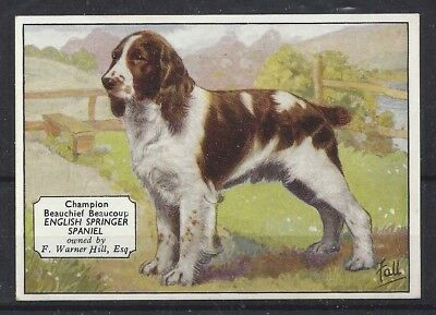 1938 UK Dog Art Photo Hnd Colored Ardath Cigarette Card ENGLISH SPRINGER SPANIEL
