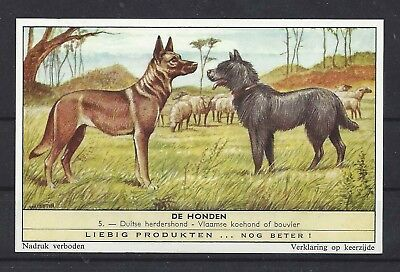 Rare 1950s Dutch Leibig Dog Art Card BELGIAN MALINOIS BOUVIER DES FLANDRES