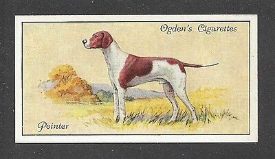 1936 UK Dog Art Body Portrait Ogdens Cigarette Card ENGLISH POINTER Field Point