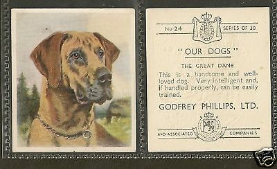 1939 Our Dogs Dog Art Head Study Godfrey Phillips Cigarette Card FAWN GREAT DANE