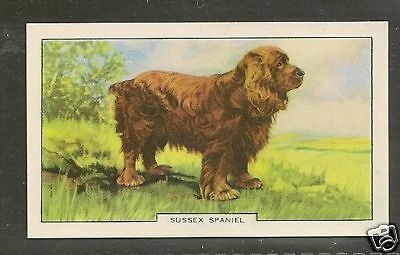 1938 UK Dog Art Full Body Study Gallaher Series B Cigarette Card SUSSEX SPANIEL