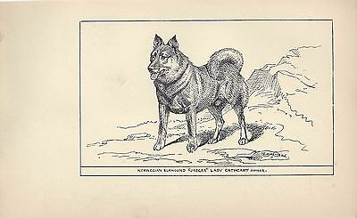 1900 UK Original Dog Art Pen & Ink Print RH Moore NORWEGIAN ELKHOUND Jaeger