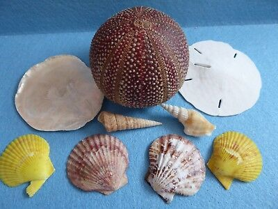 Collection exotic sea shells/urchins. Bathroom/beach/nautical scene/artwork.